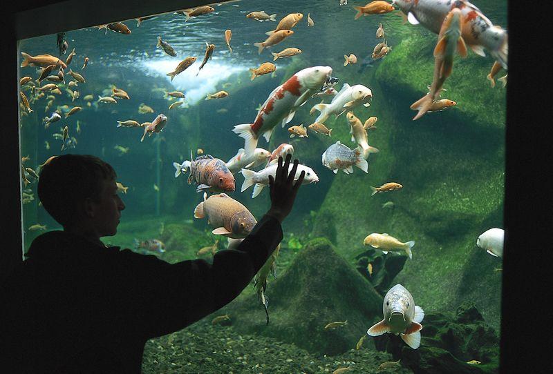 Aquarium du Val de Loire - Les parcs et Zoo de la region Touraine ...