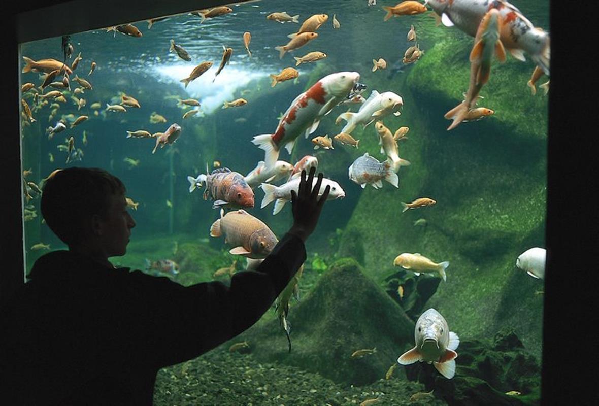 aquarium eau douce touraine